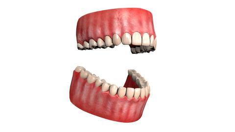 teeth gums jaw 3d animation Animation