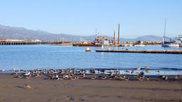 Seabirds on the shore of Santa Barbara Harbor Footage
