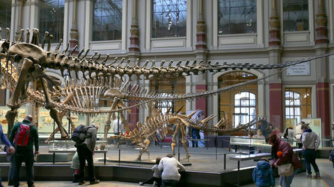 8 Berlin City Germany Europe Natural History Museum People Dinosaurs Footage