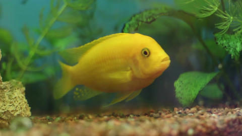 Tropical Fish In Aquarium 10 Footage