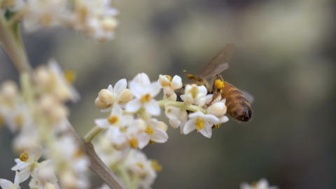 Bee Flower Slow Motion Footage