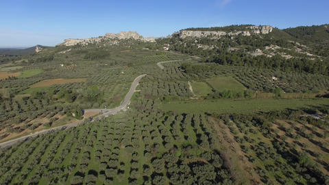 Fields of Olives around Les Baux de Provence, seen by drone Footage