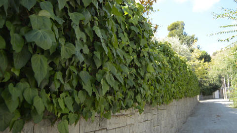 Well Trimmed Leaves Wall Footage