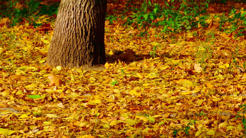 4K Man in Jeans in Sport Sneakers Walks Along Yellow Foliage in Park Footage