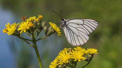 Butterfly Filmmaterial