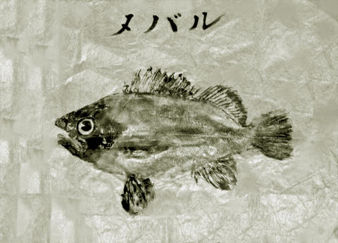 Fish print フォト