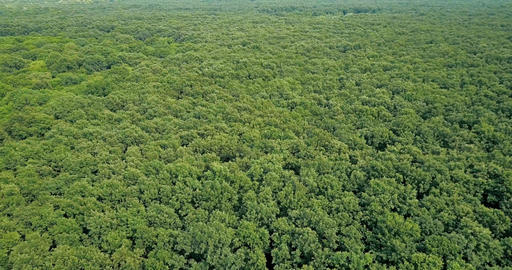 Aerial Drone View Of Forest Trees Landscape In Summer ビデオ