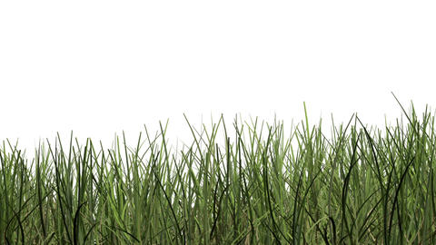 pan and zoom camera - Green grass against white background Animation