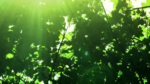 View through Sunshine the trees green leaf the sunny day Footage