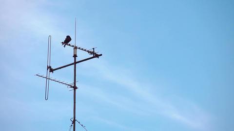 Video of bird sitting on tv antenna in 4K Footage