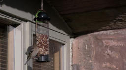 Chaffinch Lands On Bird Feeder Footage