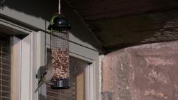 Chaffinch Lands On Bird Feeder Filmmaterial