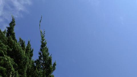 Sky & Green Footage