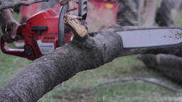 Man operates a chainsaw which cut the branches of a tree in the forest 15b Footage