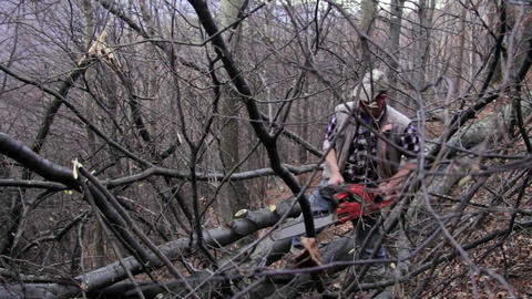 Man operates a chainsaw, which cut the branches of a tree in the forest 11 Footage