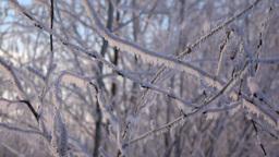 Frozen bush branch, hoarfrost fall down, close up slow motion shot Footage