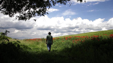 Man walks next to a field with red poppies 01 Footage