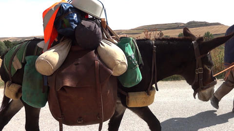 Man on the street who keeps a donkey with a halter. Donkey is loaded luggage Footage
