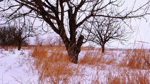 Dry Grass Under White Snow Footage
