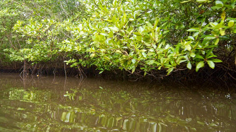 Floating through mangroves Footage