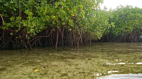 Floating near mangroves shore Footage