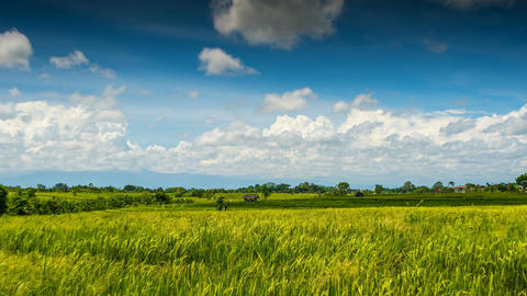 Green rice field under clouds time lapse Footage