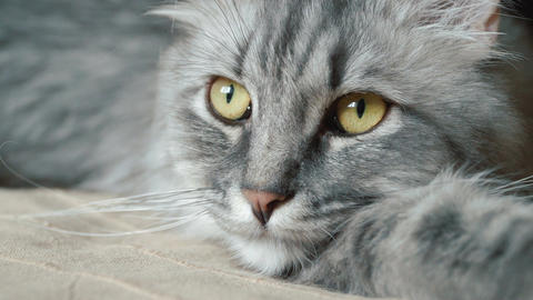 Close-up video of cat's face Filmmaterial