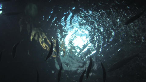 Sunlight gleaming Through Ocean Water and Fish Background Footage