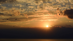 Birds flying during sunset Footage