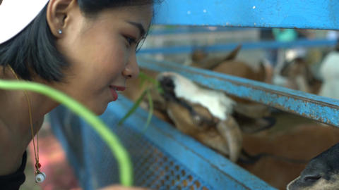 Young asian woman in zoo Filmmaterial
