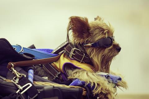 Dog Foto
