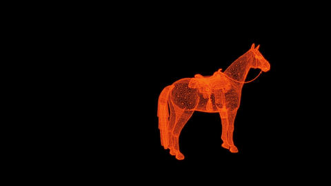 animation - rotation of wire frame isolated horse on... Stock Video Footage