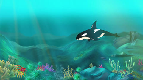 Killer whale underwater Animation