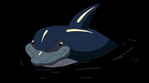 Navy Blue Dolphin in the Water