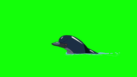 Navy Blue Dolphin Swims in the Water Animation