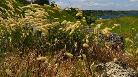 Untouched wild nature, grass on the slopes of the Hadzhibey estuary. Melica tran Footage