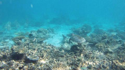 Coral Reef Pack