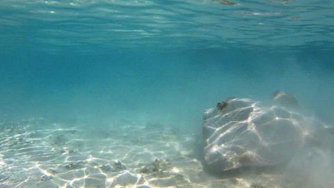 Coral Reef Pack 2