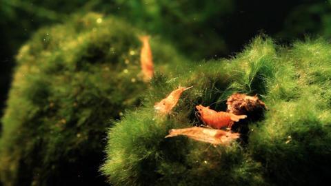 Shrimp Aquarium Life