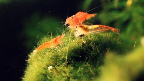 Shrimp Aquarium Life 1