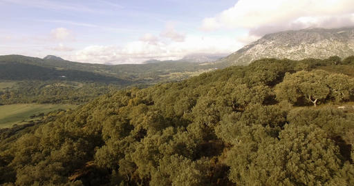 4K Aerial, Flight over a green filed, Andalusia, Spain Footage