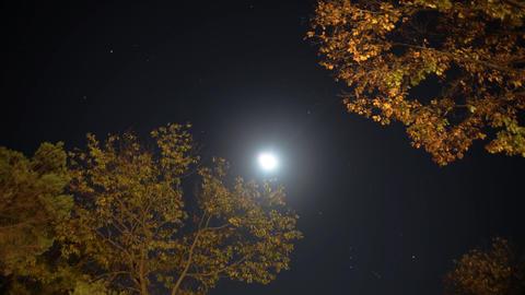 Moon 01 stock footage
