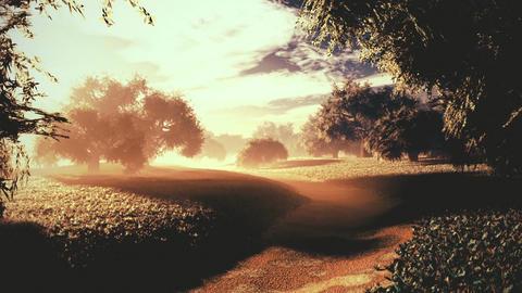Amazing Natural Wonderland in the Sunset Sunrise 9 Animation