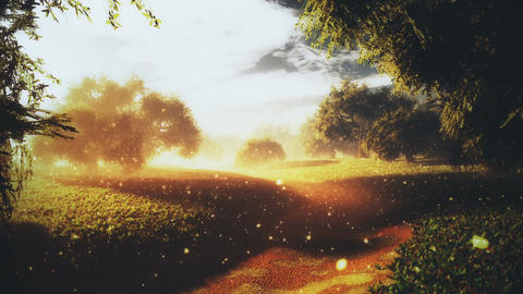 Amazing Natural Wonderland in the Sunset Sunrise with Fireflies 8 Animation