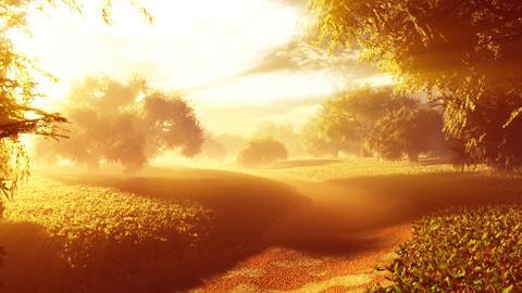 Amazing Natural Wonderland in the Sunset Sunrise with Lightrays 5 Animation