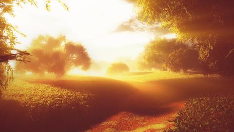 Amazing Natural Wonderland in the Sunset Sunrise with Lightrays 8 Animation