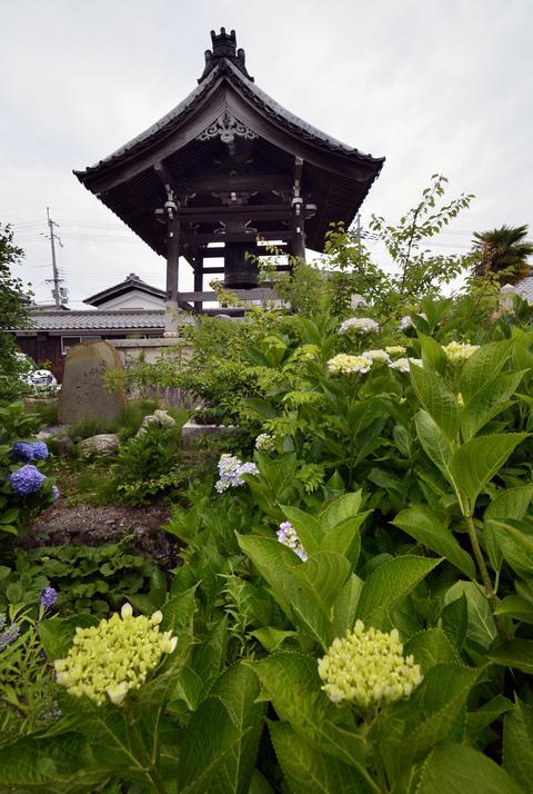 Japan's Secret Garden and the temple Photo