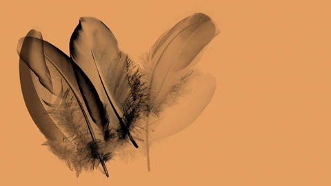 Graphic animation with black feathers on orange background - waft blowing Animation
