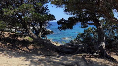 Trees Flora Mediterranean Sea Landscape In Sardinia Sardegna Italy Italia Live Action