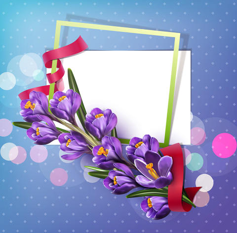 greeting card with blue crocuses , frame, red ribbon and Foto
